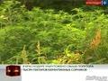 В Краснодаре уничтожено свыше полутора тысяч гектаров карантинных сорняков